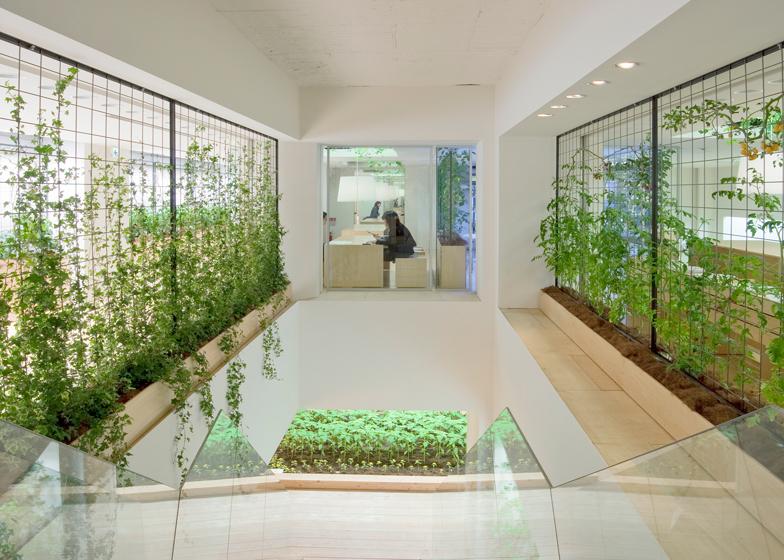 Необычное озеленение офисов pasona-urban-farm